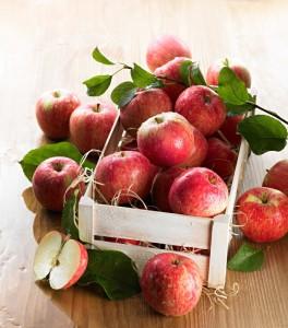 jablka-grojeckie